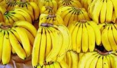 Portada plátano