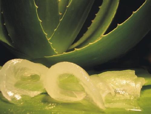 Jugo Verde para limpiar Colon y Bajar de peso