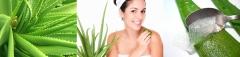Beneficios de la SÁBILA (Aloe Vera) - Blss & Glamour