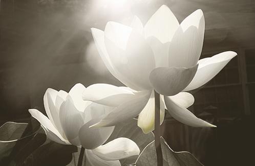 Meditación para limpiar Chakras
