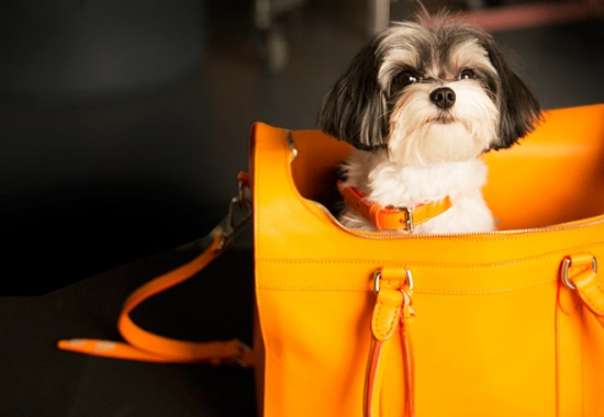 Dog Walk Ralph Lauren Campaign 1