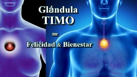 """Sabes cómo activar la """"Glándula TIMO"""" que nos da Felicidad y ..."""