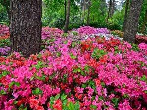 Magnesio para jardinería